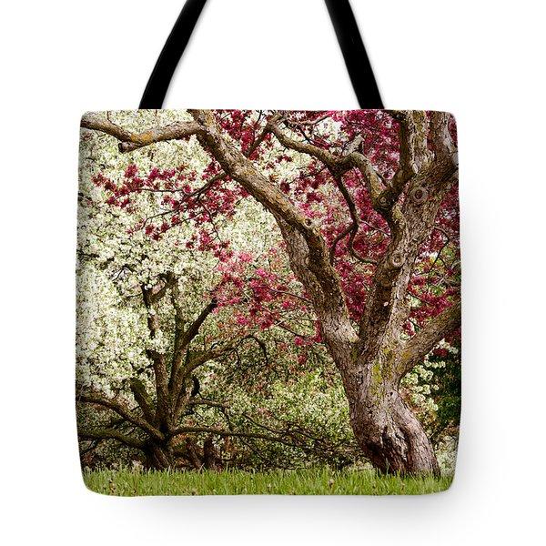 Apple Blossom Colors Tote Bag by Joe Mamer