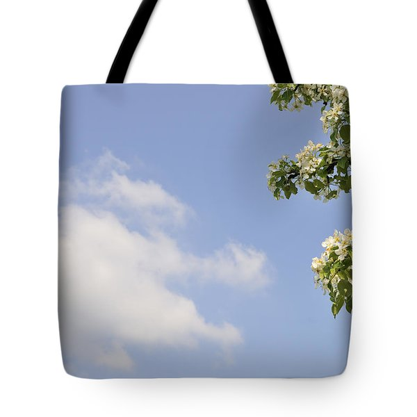 Apple blossom in spring blue sky Tote Bag by Matthias Hauser