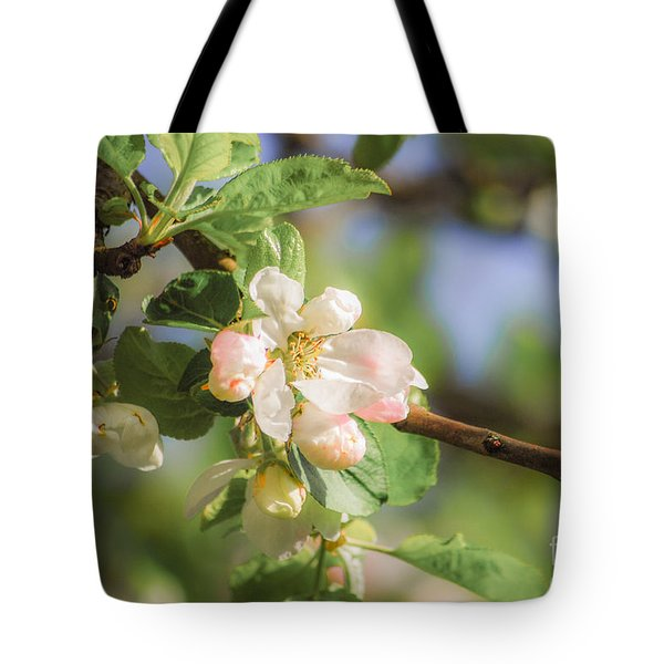 Apple Tree Blossom - Vintage Tote Bag by Hannes Cmarits