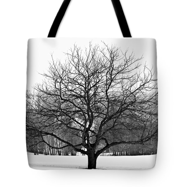 Apple Tree In Winter Tote Bag by Elena Elisseeva