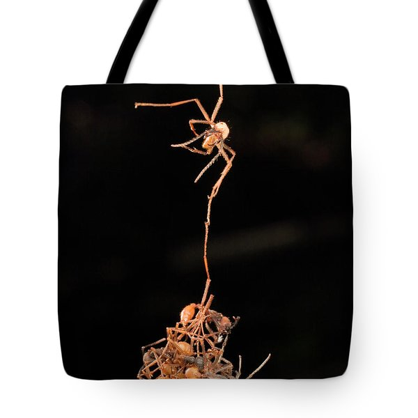 Army Ants Building Bivouac Tote Bag by Mark Moffett