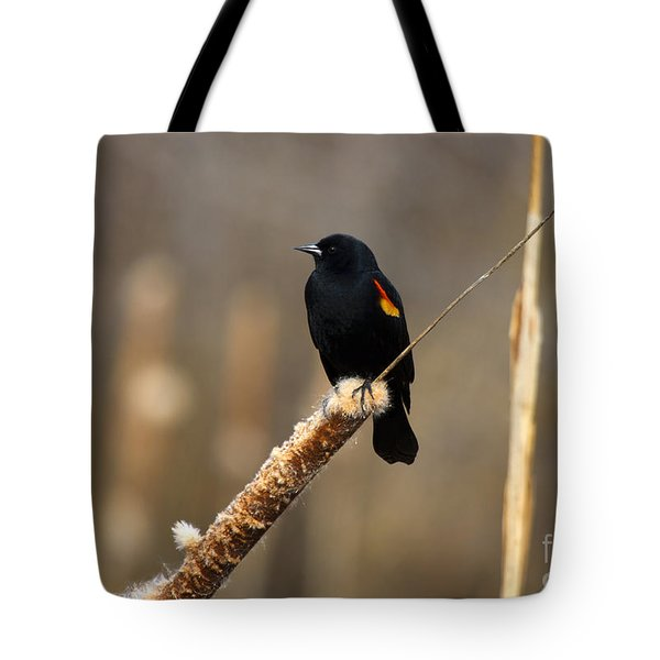 At Rest Tote Bag by Mike  Dawson
