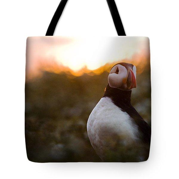 Atlantic Puffin At Sunrise Skomer Tote Bag by Sebastian Kennerknecht