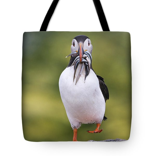 Atlantic Puffin Carrying Greater Sand Tote Bag by Franka Slothouber