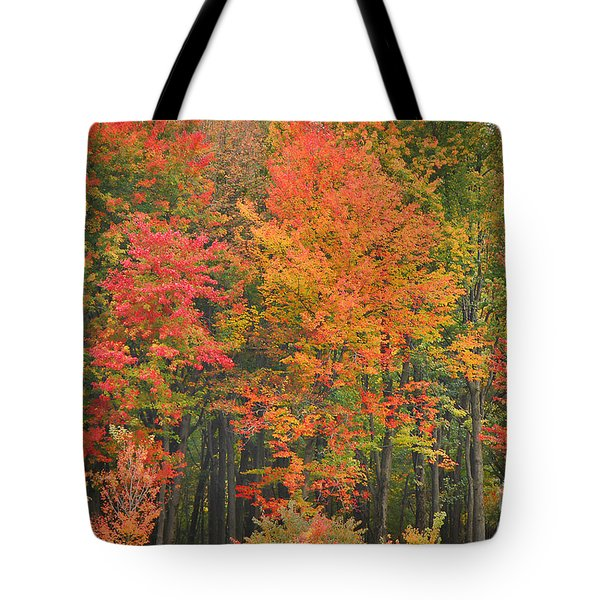 Autumn Woods Tote Bag by Mary Carol Story