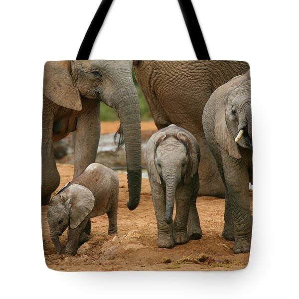 Baby African Elephants Tote Bag by Bruce J Robinson