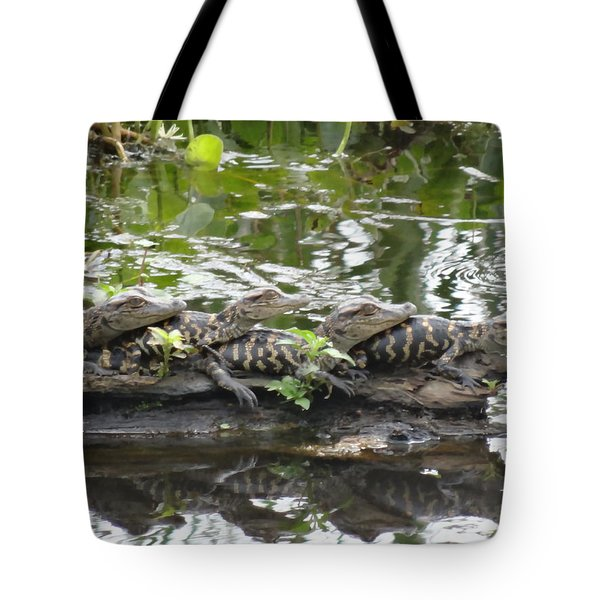 Baby Alligators Tote Bag by Dan Sproul