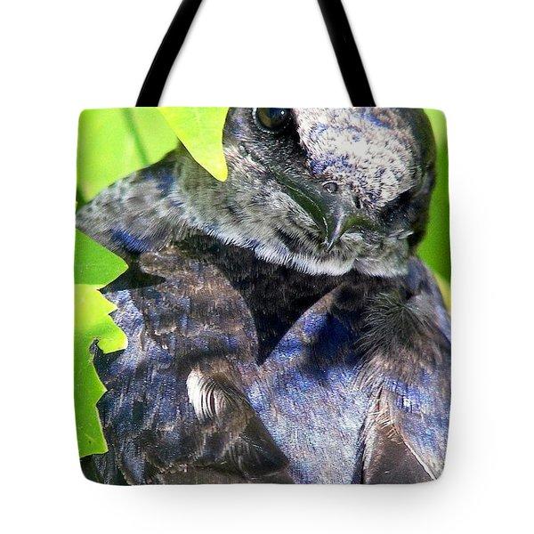 Baby Bluejay Peek Tote Bag by Karen Wiles