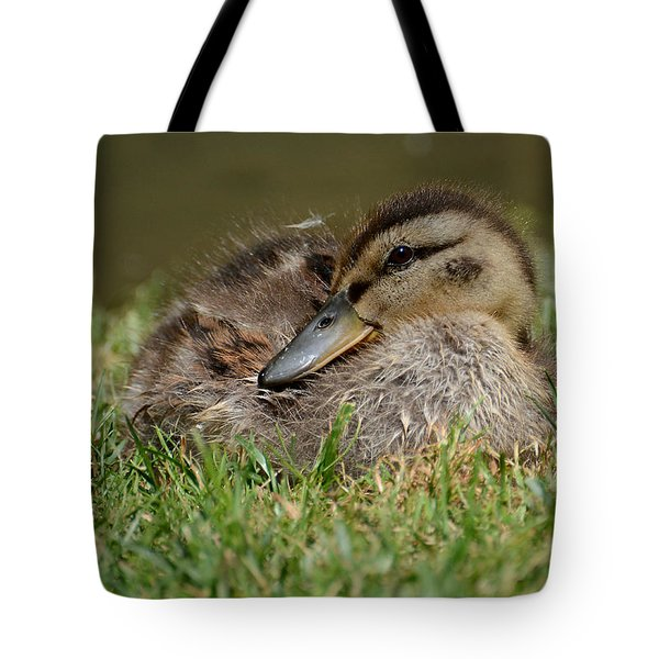 Baby Mallard Tote Bag by Todd Hostetter