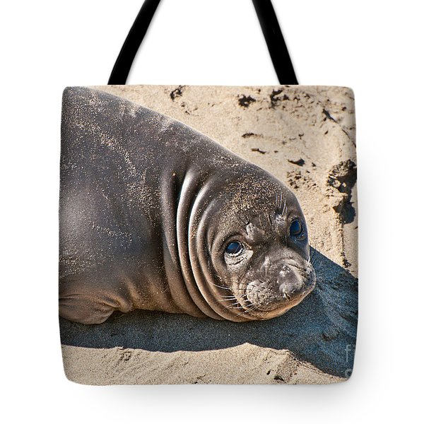 Baby Northern Elephant Seals Mirounga Angustirostris At The Piedras Blancas Beach Tote Bag by Jamie Pham