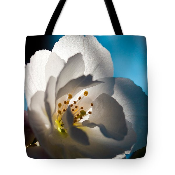 Backlit Cherry Blossom Tote Bag by David Patterson