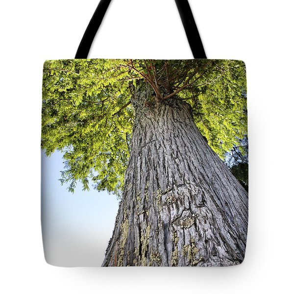 Bald Cypress in Morning Light Tote Bag by Jason Politte
