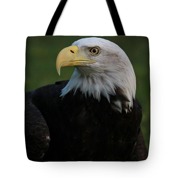 Bald Eagle Details Tote Bag by Dan Sproul