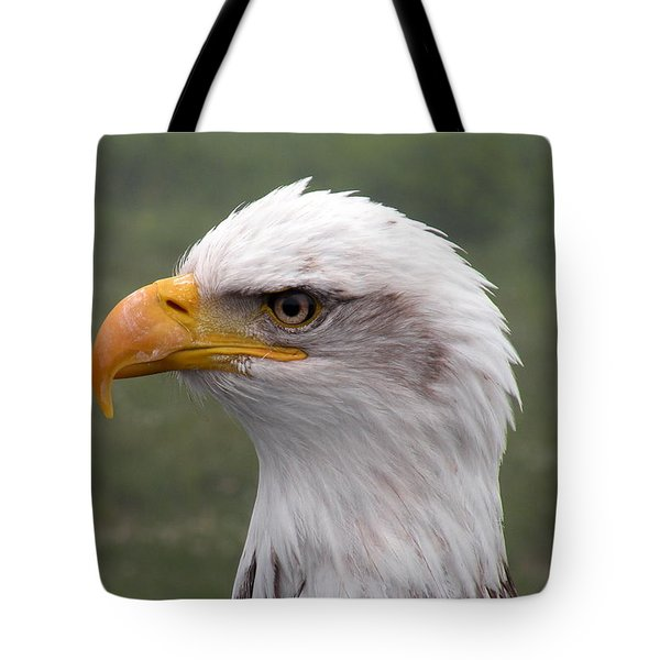 Bald Eagle Portrait Tote Bag by Brian Chase