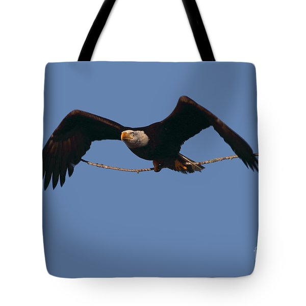 Bald Eagle With Nesting Supplies Tote Bag by Meg Rousher