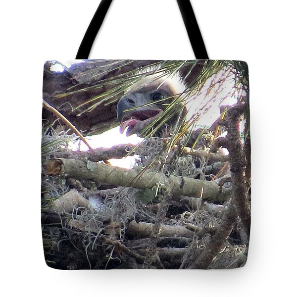 Bald Eagles Chick Tote Bag by Zina Stromberg