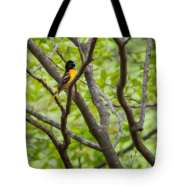 Baltimore Oriole Tote Bag by Bill Wakeley