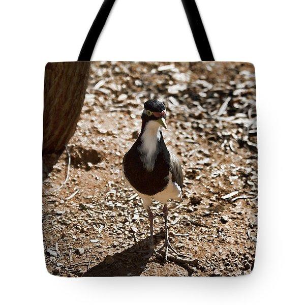 Banded Lapwing Tote Bag by Douglas Barnard