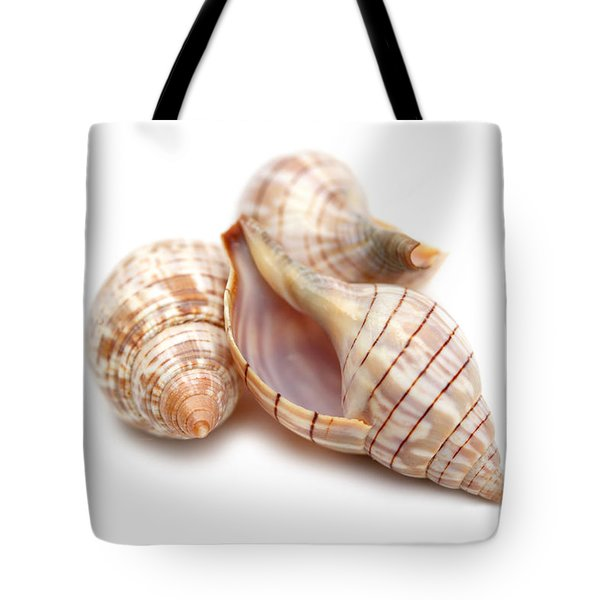 Banded Tulip Seashells Macro Tote Bag by Jennie Marie Schell