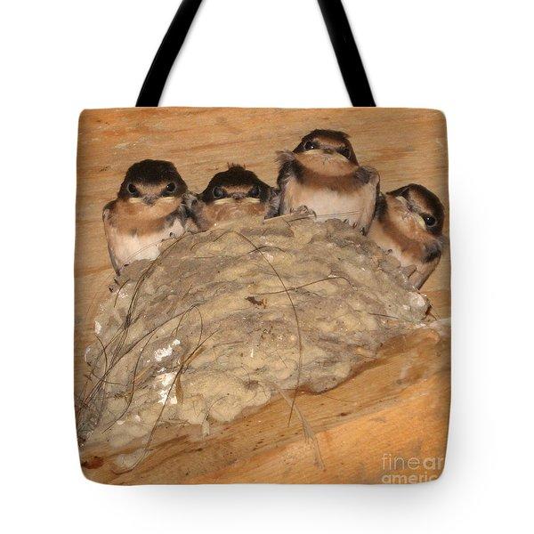 Barn Swallow Chicks 2 Tote Bag by Conni Schaftenaar Elderberry Blossom Art