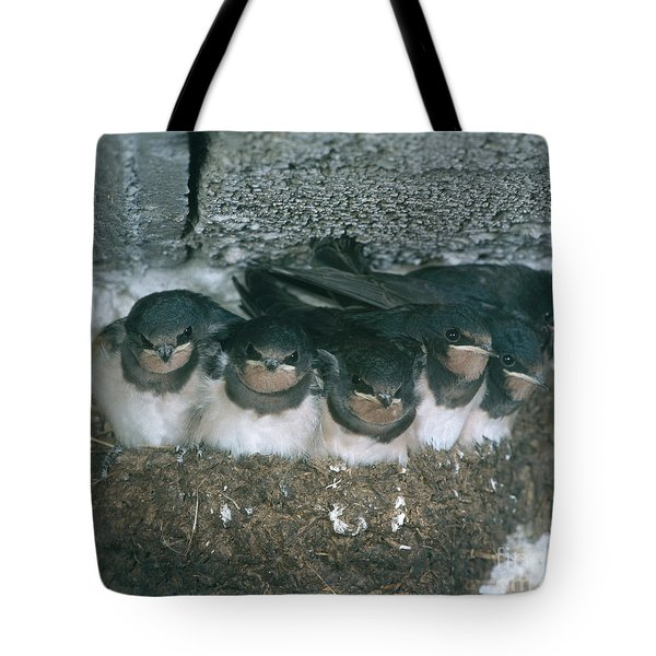 Barn Swallows Tote Bag by Hans Reinhard