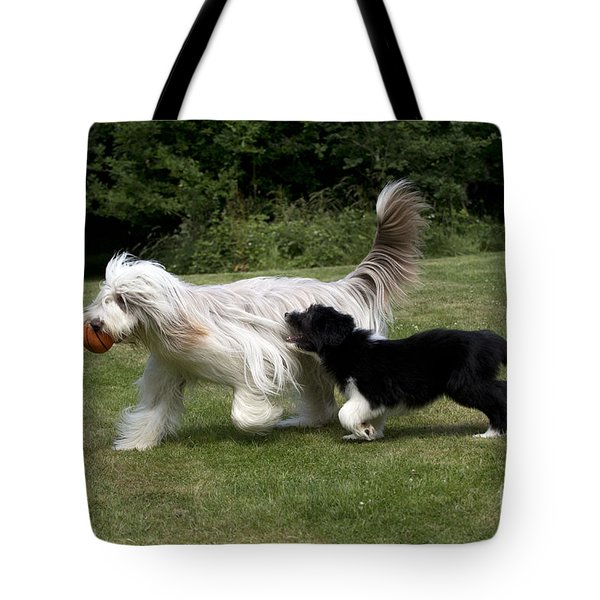 Bearded Collies Playing Tote Bag by John Daniels