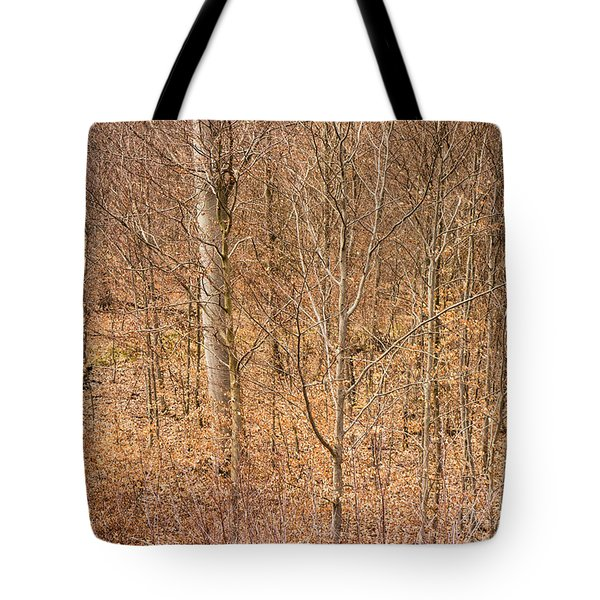 Beautiful fine structure of trees brown and orange Tote Bag by Matthias Hauser