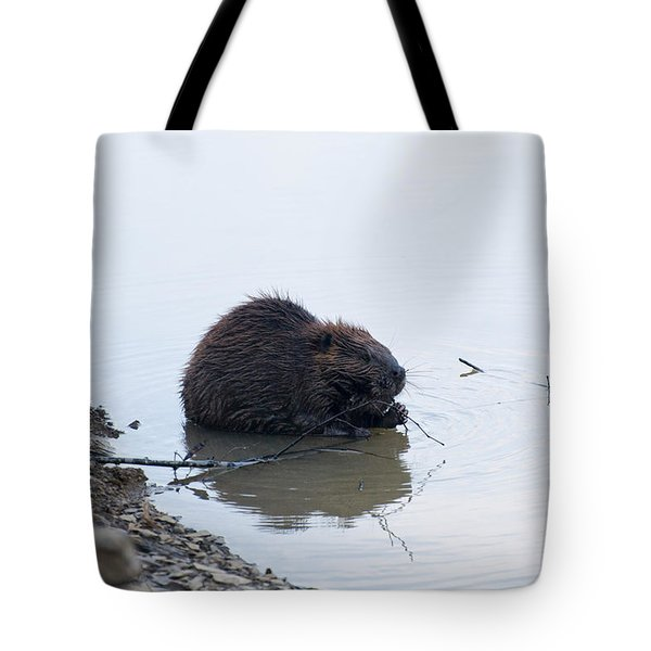 Beaver In The Shallows Tote Bag by Chris Flees