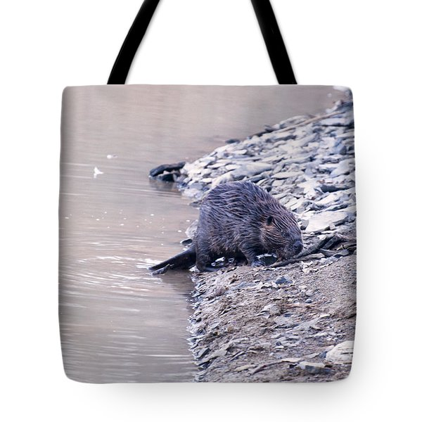 Beaver On Dry Land Tote Bag by Chris Flees