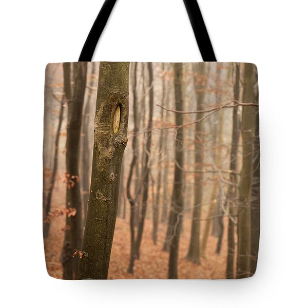 Beech Wood In Autumn Tote Bag by Anne Gilbert
