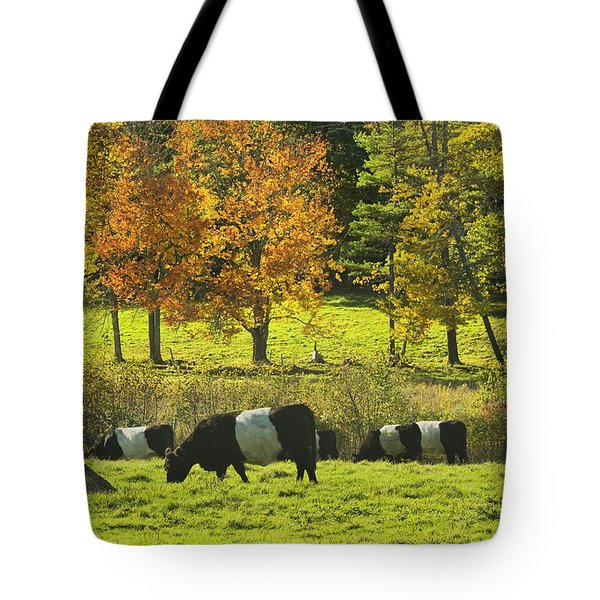 Belted Galloway Cows Grazing On Grass In Rockport Farm Fall Maine Photograph Tote Bag by Keith Webber Jr