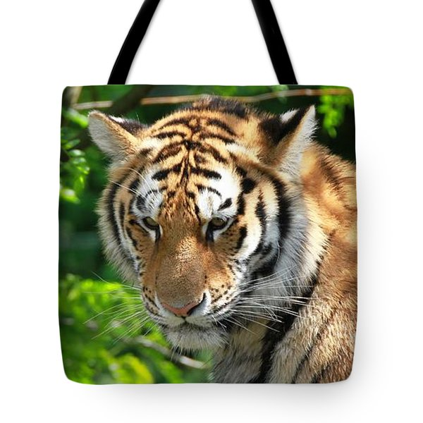 Bengal Tiger Portrait Tote Bag by Dan Sproul
