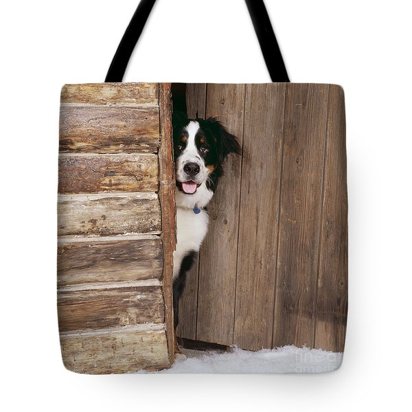 Bernese Mountain Dog At Log Cabin Door Tote Bag by John Daniels