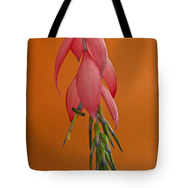Bilbergia  Windii Blossom Tote Bag by Heiko Koehrer-Wagner
