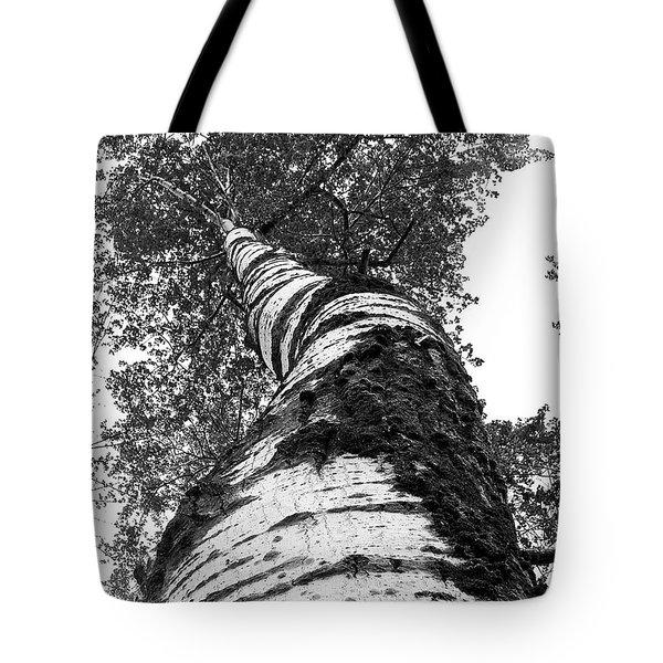 Birch Tree Tote Bag by Tim Buisman