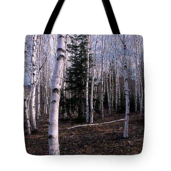 Birches Tote Bag by Skip Willits