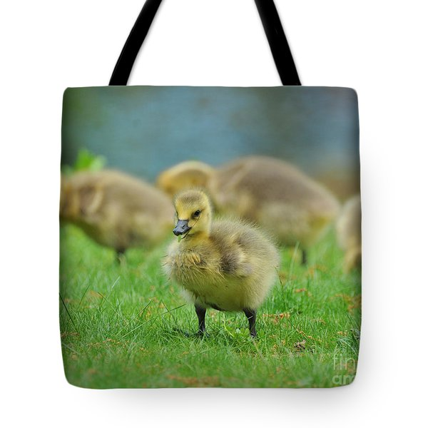 Bird - Baby Goose -leader Of The Pack Tote Bag by Paul Ward