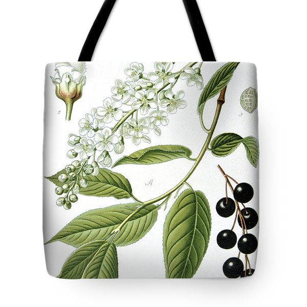 Bird Cherry Cerasus Padus Or Prunus Padus Tote Bag by Anonymous
