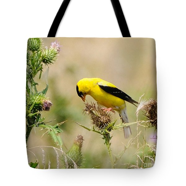 Bird -gold Finch Feasting  Tote Bag by Paul Ward