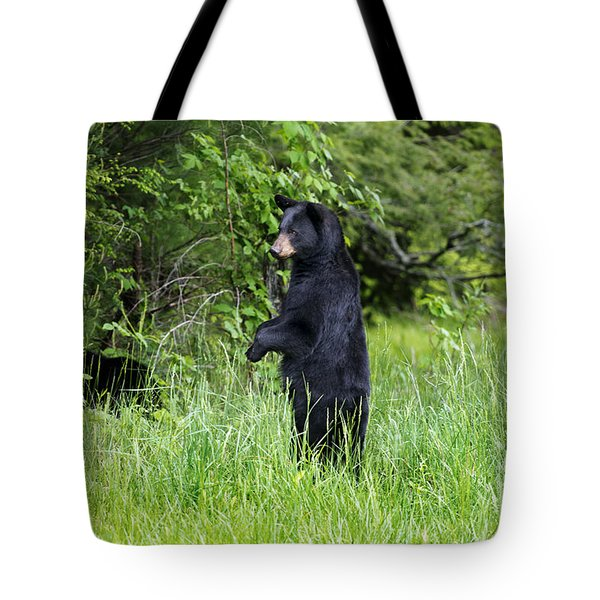 Black Bear Standing Upright Looking Tote Bag by Dan Friend