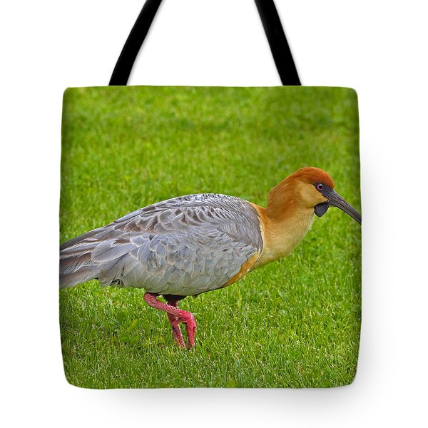 Black-faced Ibis Tote Bag by Tony Beck