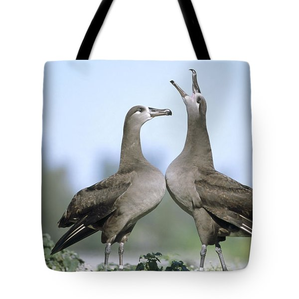 Black-footed Albatross Courtship Dance Tote Bag by Tui De Roy