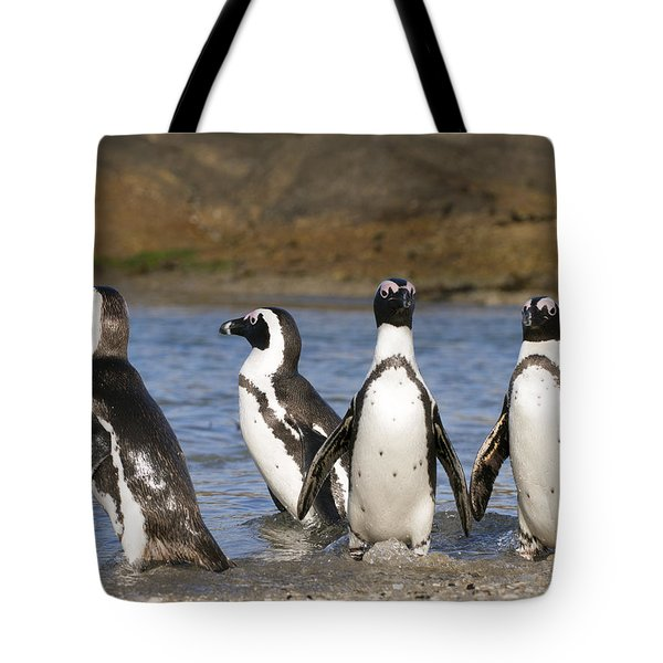 Black-footed Penguins On Beach Cape Tote Bag by Alexander Koenders