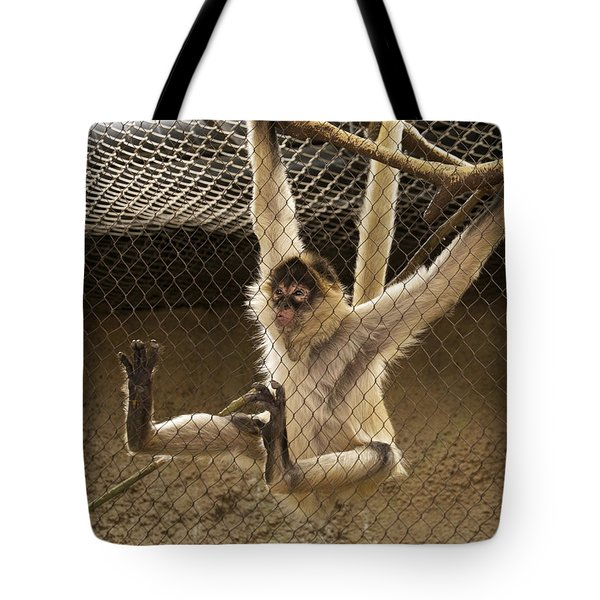 Black Handed Spider Monkey Just Sitting Around Tote Bag by Thomas Woolworth