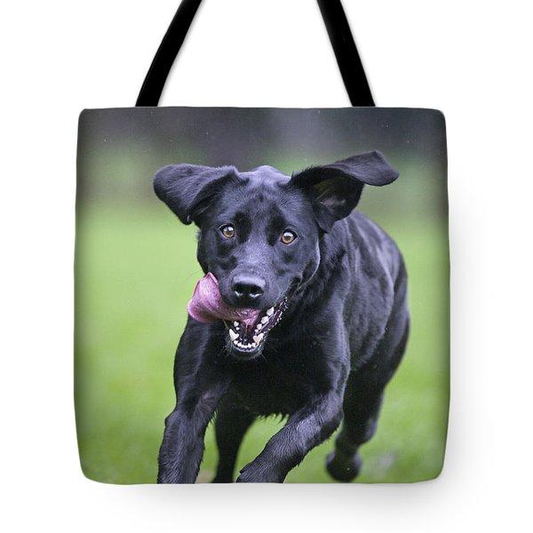 Black Labrador Running Tote Bag by Johan De Meester