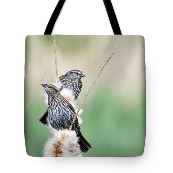 Blackbird Pair Tote Bag by Mike  Dawson