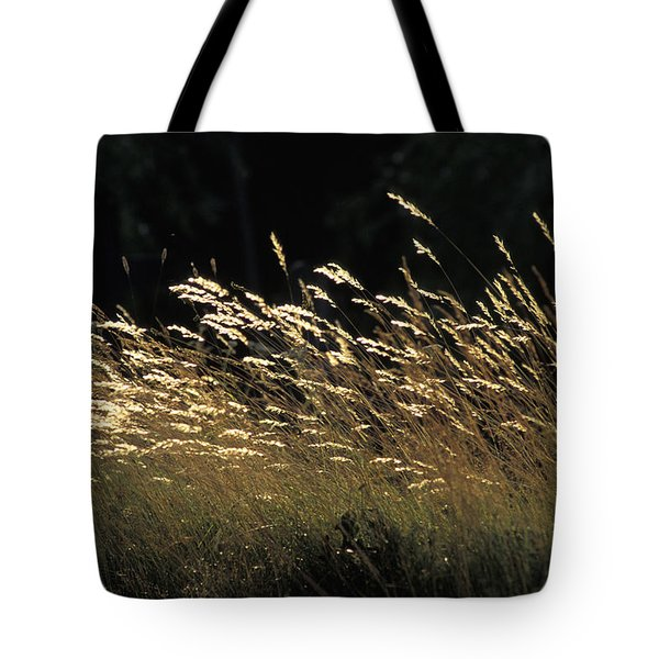 Blades Of Grass In The Sunlight Tote Bag by Jim Holmes