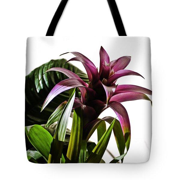 Blooming Bromeliad Tote Bag by Christi Kraft