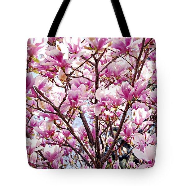 Blooming magnolia Tote Bag by Elena Elisseeva