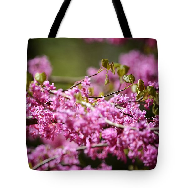 Blooming Redbud Tree Cercis canadensis Tote Bag by Rebecca Sherman